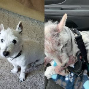 Tucker Now and Before