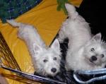 Betsy and Poppy