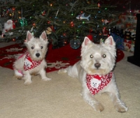 Ellie and Charlie, ready for Santa