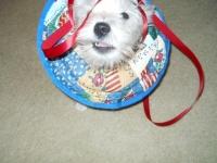 Ellie Helps Wrap Gifts